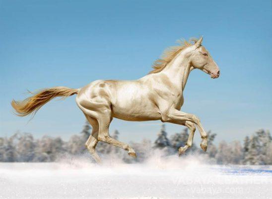 da ngựa shell cordovan