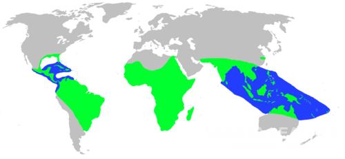 Sơ đồ phân bố khu vực sinh sống của cá sấu