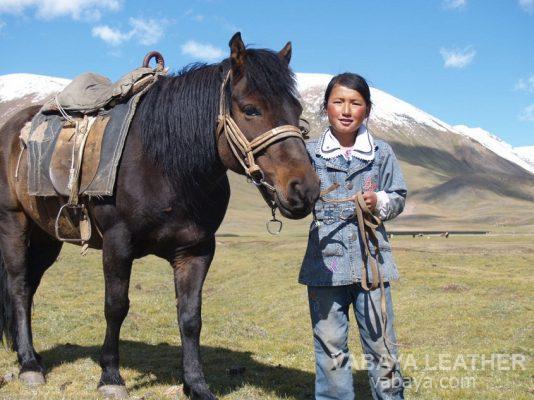 Ngựa mông cổ là những người bạn thân thiết