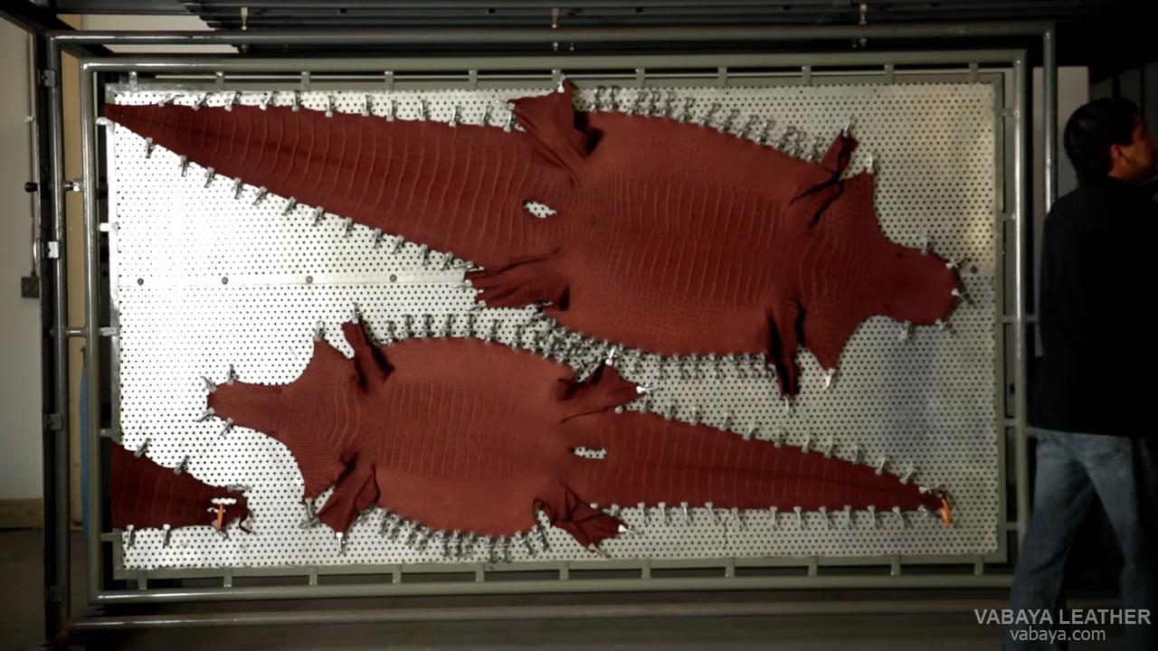 Những tấm da cá sấu đang được hong khô