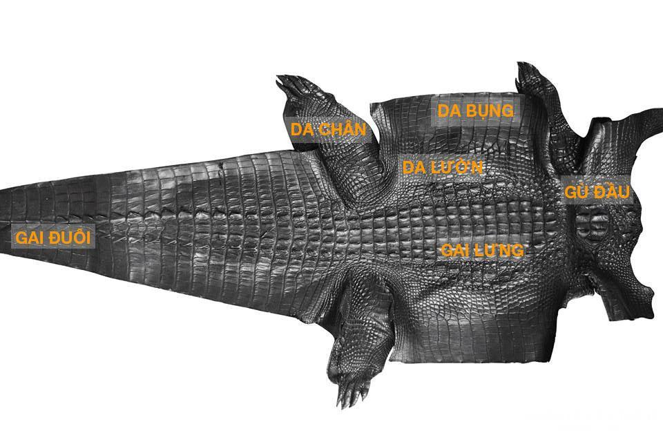 Các phần trên tấm da cá sấu